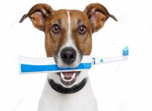 What Is The Best Toothbrush Manual Or Electric Smile
